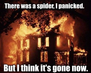 v3-amused-_img-spider-burning-house